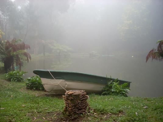 Spring (fog).jpg