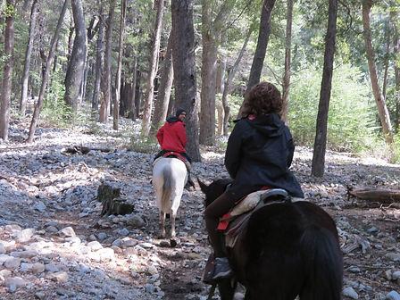 Passeio a cavalo pela floresta andina.