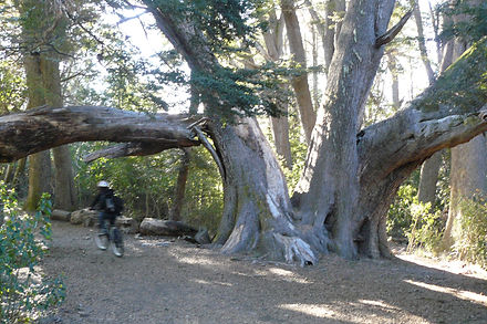 Passeio de bicicleta na Peninsula de Quetrihue.
