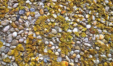 lichen-2903722_1920.jpg