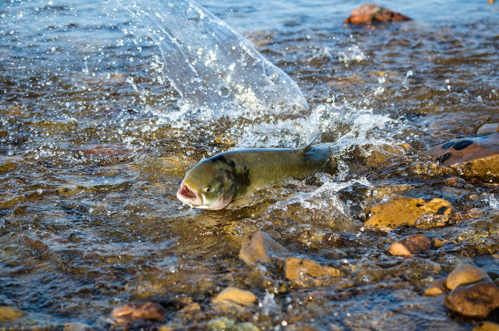 Migrating through shallow water