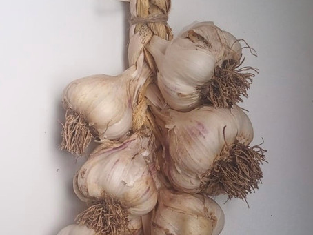 Garlic and Onions - it's harvest time!