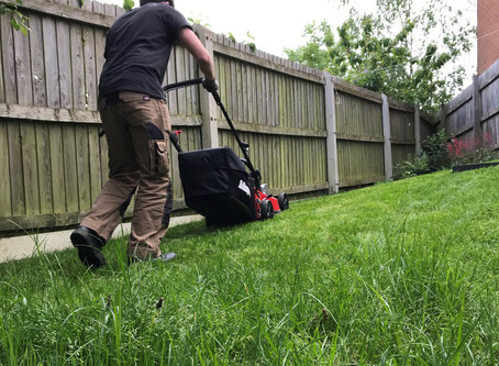 Looking after your sward - or mowing your lawn