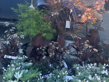 Plants we have in stock