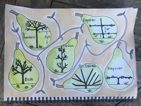 Shapes for your fruit tree