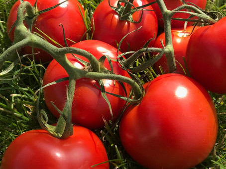 Grow your own - Dig for Victory - Tomatoes