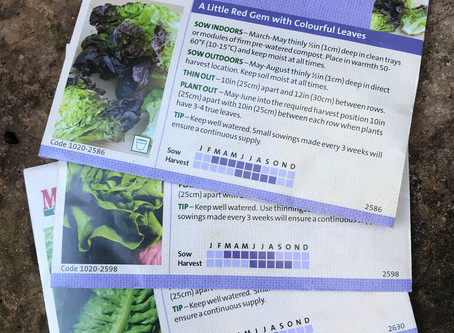 Grow your own - Dig for Victory - Lettuce