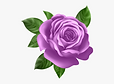0-5_purple-roses-clipart-purple-rose-cli