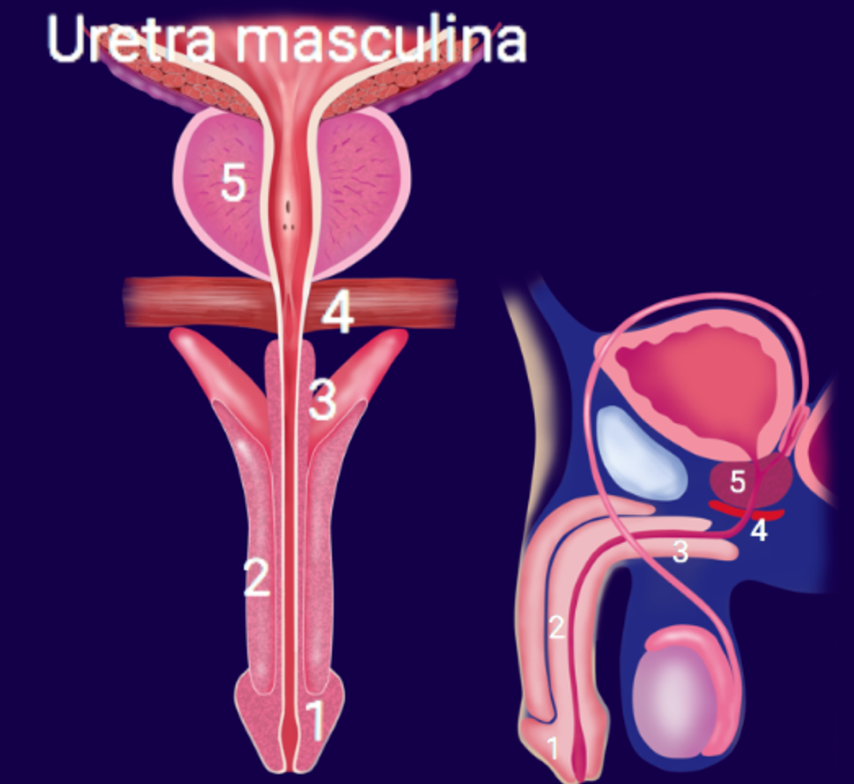 Uretrocistoscopia