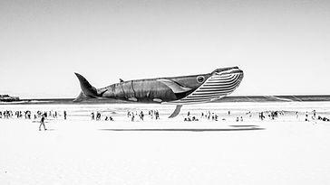 Whale Kite copy copy.jpg
