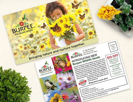 Sample of a Direct Mail Campaign Postcard Design