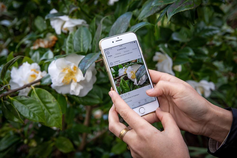 Candide gardening app Mosadi Spring bees