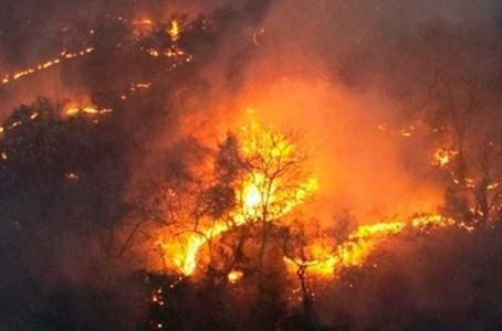 Queimadas de florestas subiram 13% entre janeiro e abril em todo o mundo, diz WWF.