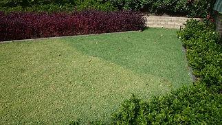 ColourGuard, lawn paint