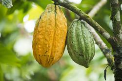 Cacao pot Archidona