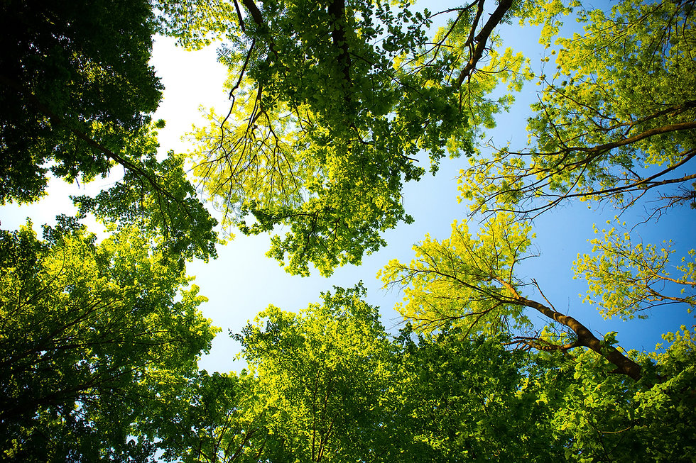 daylight-forest-nature-589802.jpg