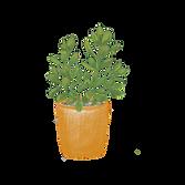 Indoor Plant_Jade.png