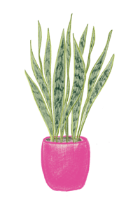Indoor Plant_Mothers Tongue.png