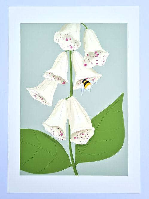 Foxglove & Bee | Irish Wildflower Illustrated Fine Art Print