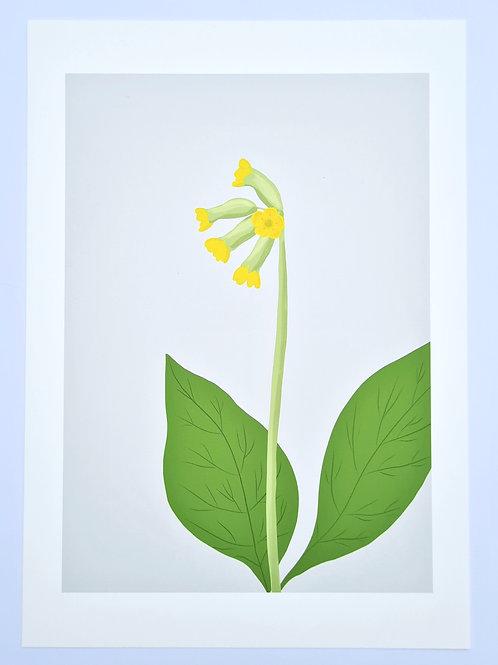Cowslip | Irish Wildflower Illustrated Art Print