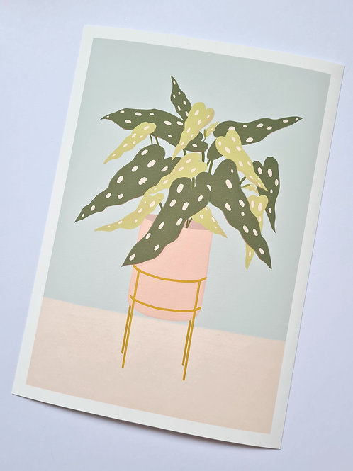 Spotted Begonia Art Print