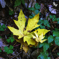 Nature Photography Yellow Leaf 1