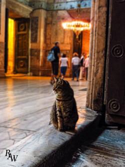 Cat Pet Photos