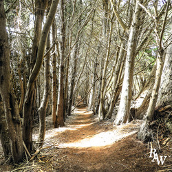 Landscape Nature Corridor of Trees