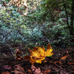 Nature Photography Yellow Leaf 2