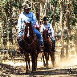 Portrait Horseback Riders Horses