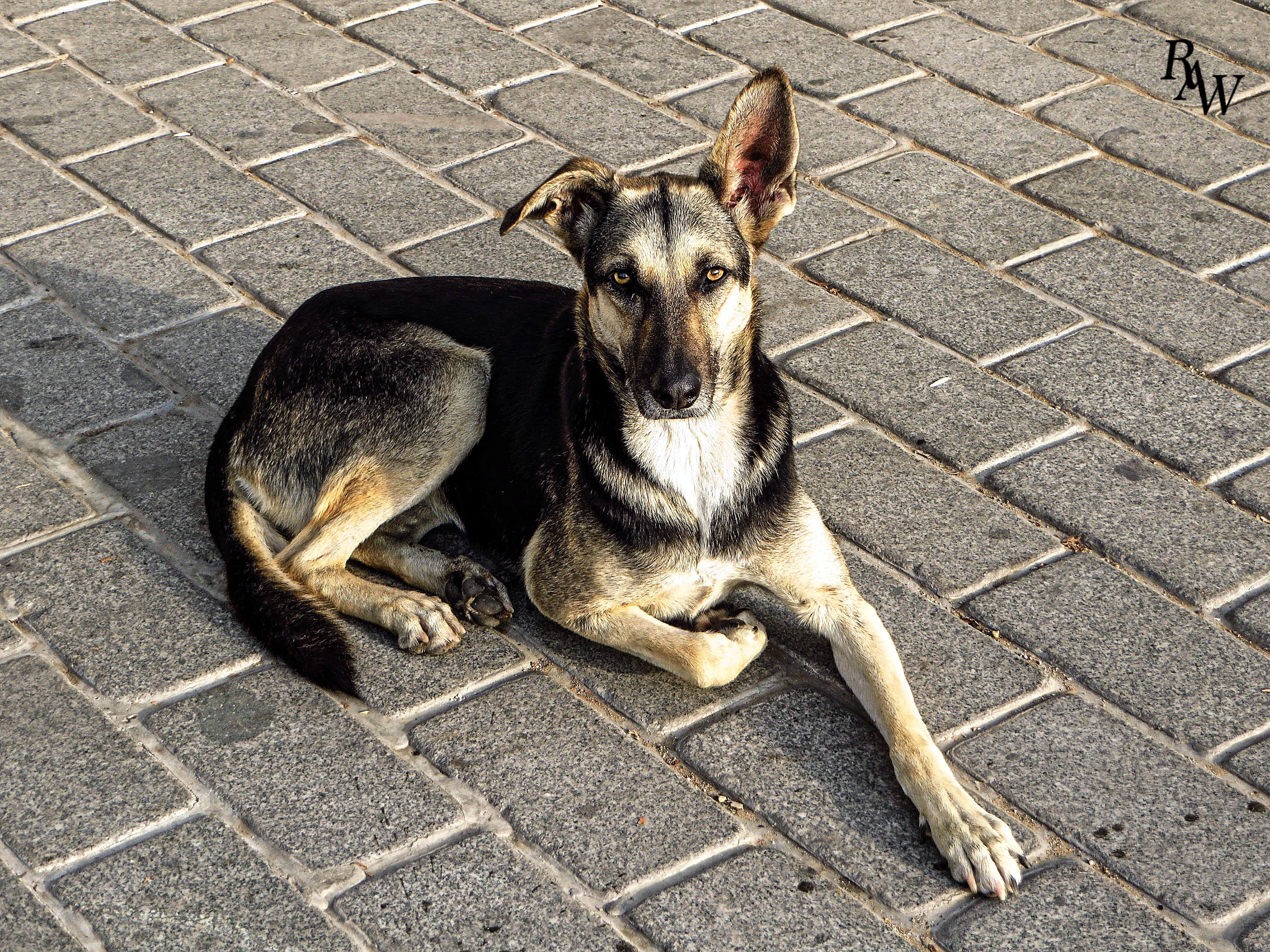 Dog Pet Photos