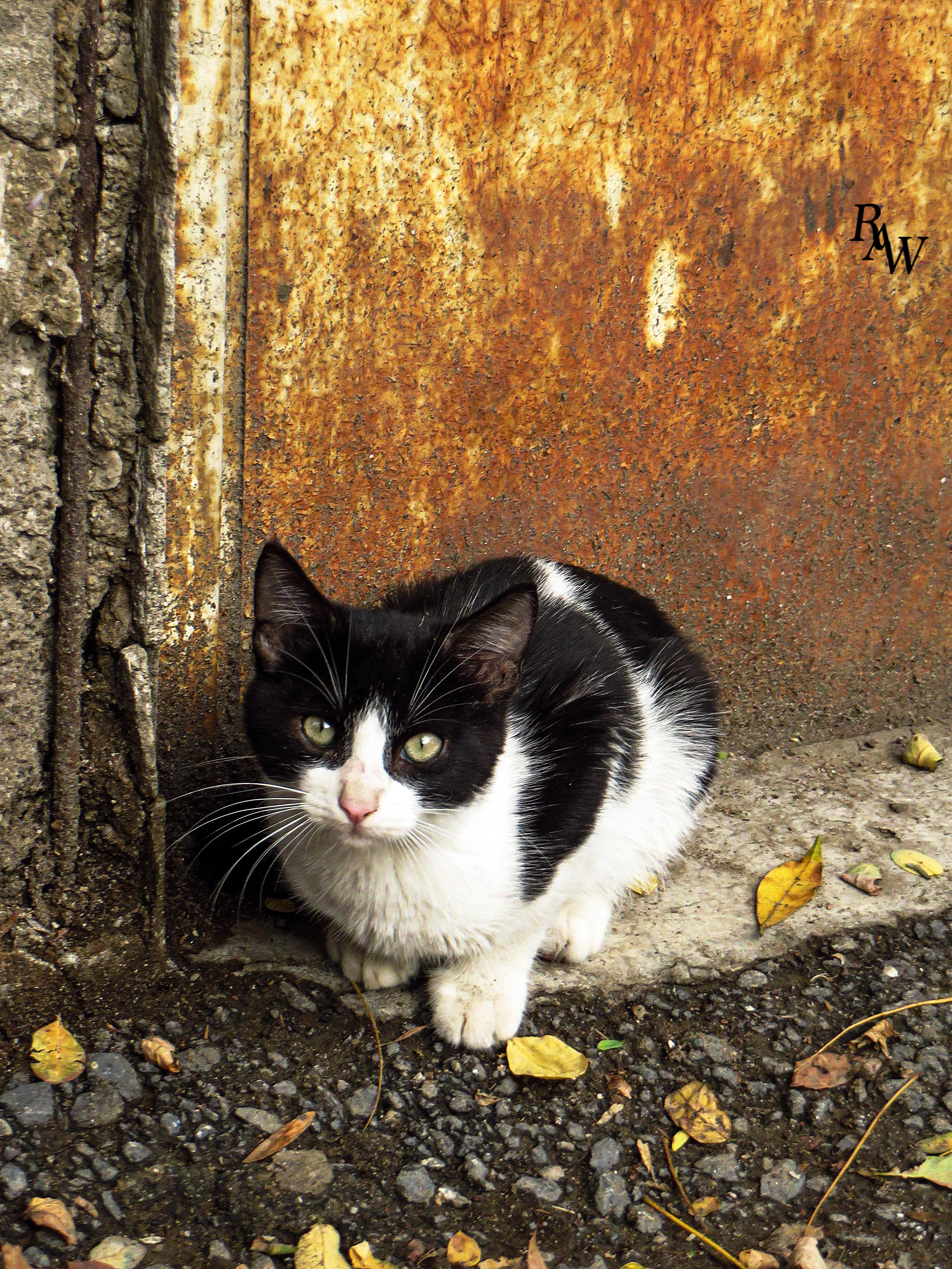 Cat Pet Photos 2