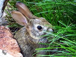 Animal Photos Rabbit Pet Photos