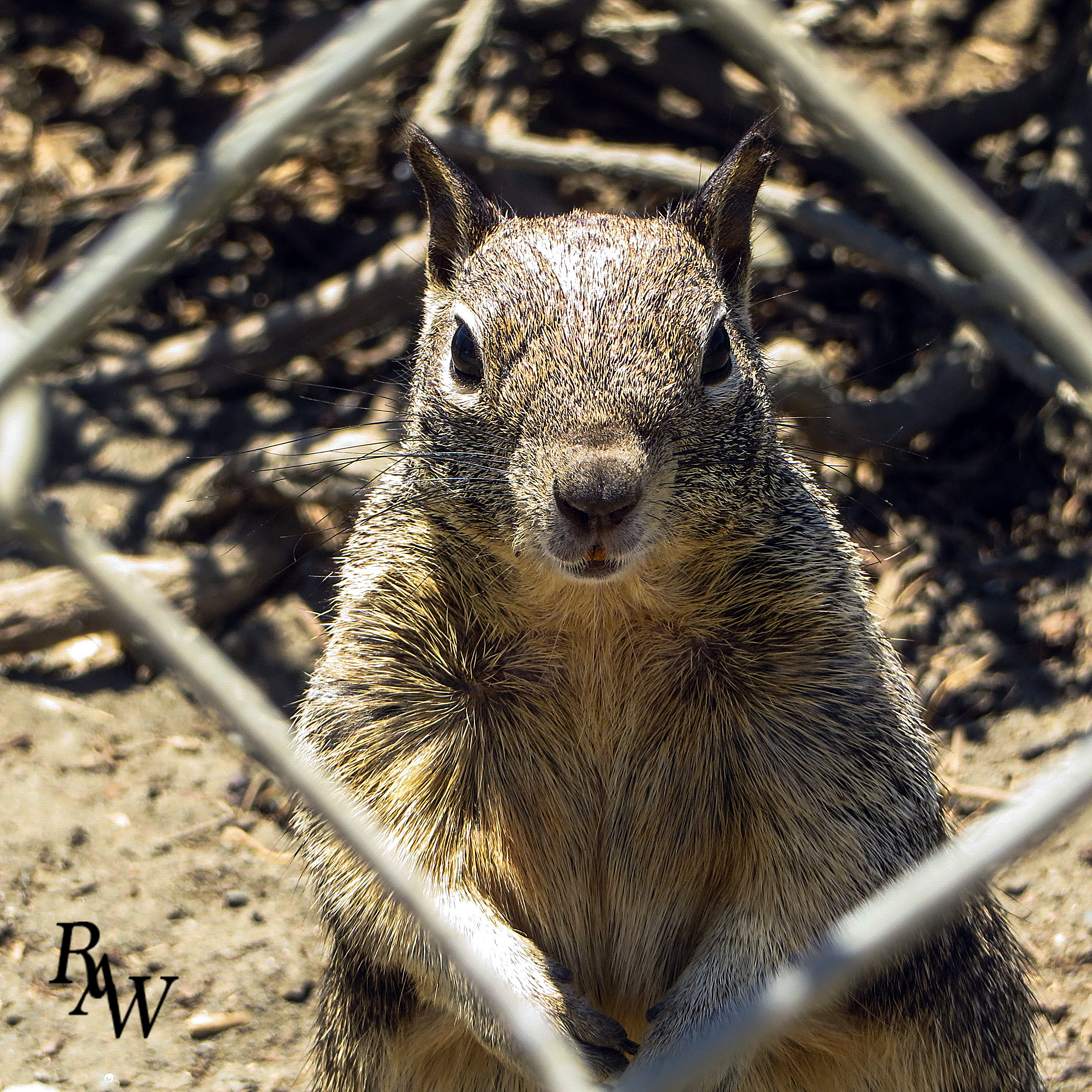 Animal Photos Squirrel
