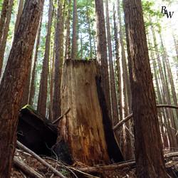 Nature Photography Tree Stump