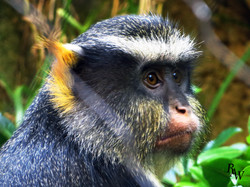 Animal Photos Monkey Closeup 2