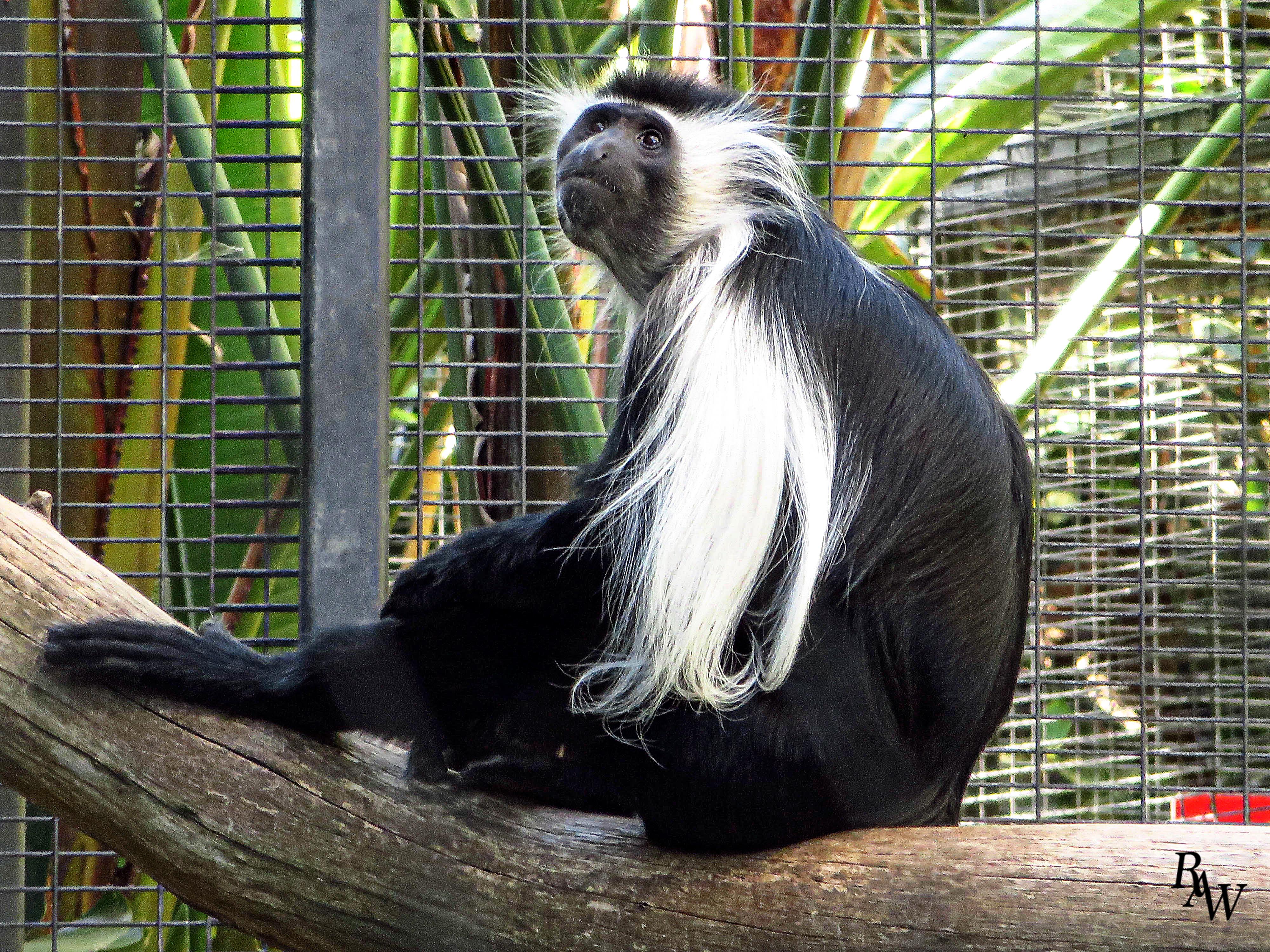 Animal Photos Monkey Closeup 1