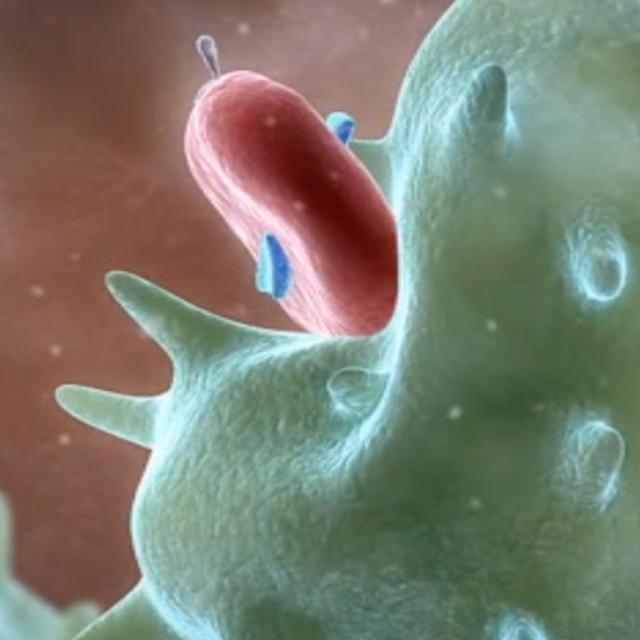 macrophage destroying virus