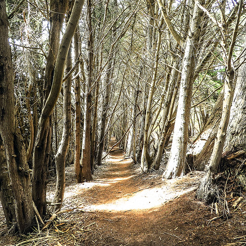"8"" x 8"" Forest Path Lustre Print"