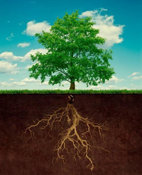 danzversity roots