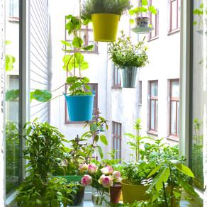 Fensterbrettgarten 2015, ein grünes Fleckerl im urbanen Lebensraum