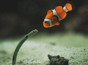 Nemo&Friend.PNG