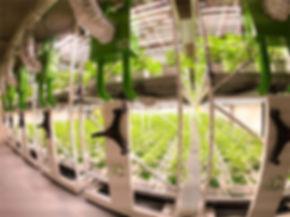 cannegrow-cannabis-farm-switzerland-brav