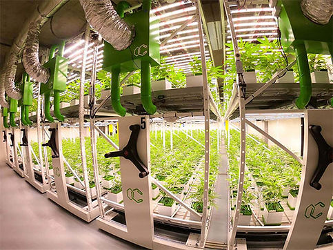 cannegrow-cannabis-farm-switzerland-brav