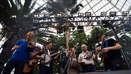 Loose Moose String Band at The Palm House