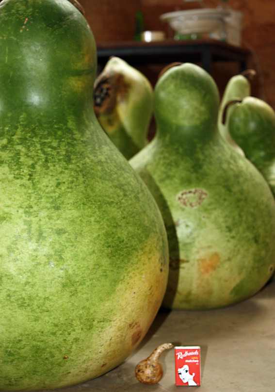 Giantgourds.jpg