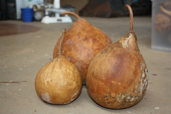 Cannonball Gourd (Large)