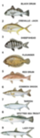 Nine top fish species found in the Tomoka River and surrounding inland waterways visited in Charters with Captain Kent Gibbens