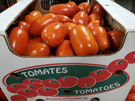 What's🌱at Rochon Garden: Tomatoes