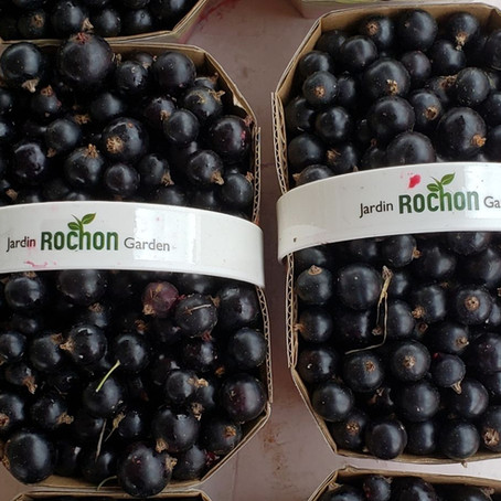 What's🌱at Rochon Garden: Currants